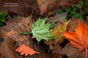 листья из кожи